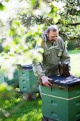 Bee keeper at work, Molnlycke, Vastergotland, Sweden