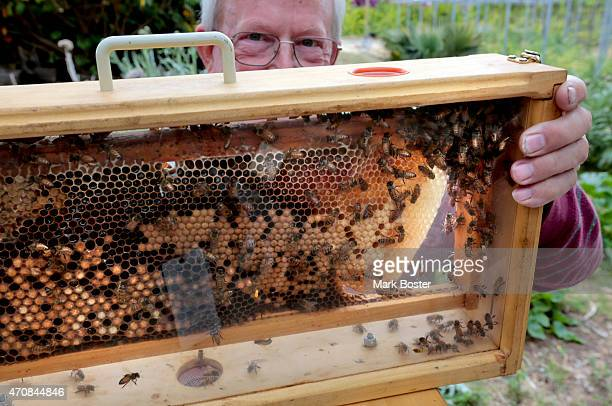 Bee keeper Dick Barnes holds a boxfull of bees during an Earth Day celebration at the Growing Experience Urban Farm in Long Beach April 22 2015 The...