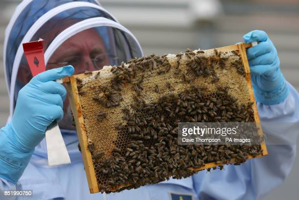 A bee keeper holds a tray of bees during a photocall at The Printworks in Manchester city centre
