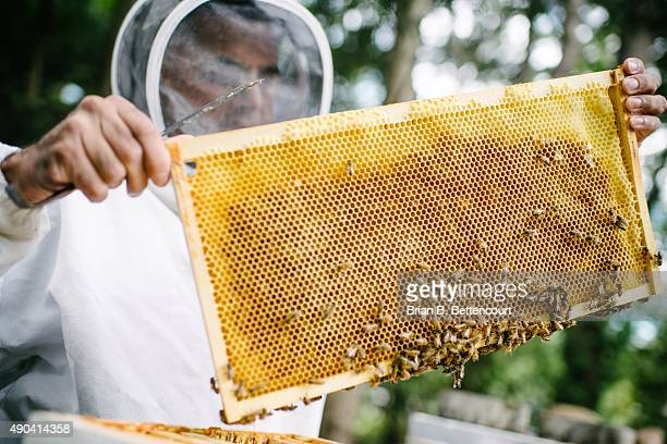 Bee keeper Kuldip Jassal inspects his bee hives in North York on September 21 2015 Jassal uses friend's and neighbours' backyard to host the hives