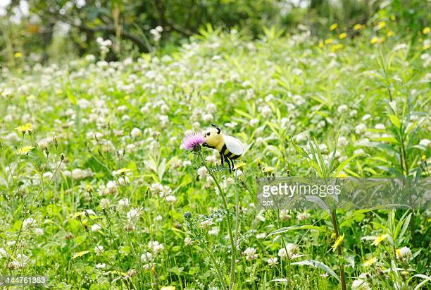 A bee on the flower in grass field