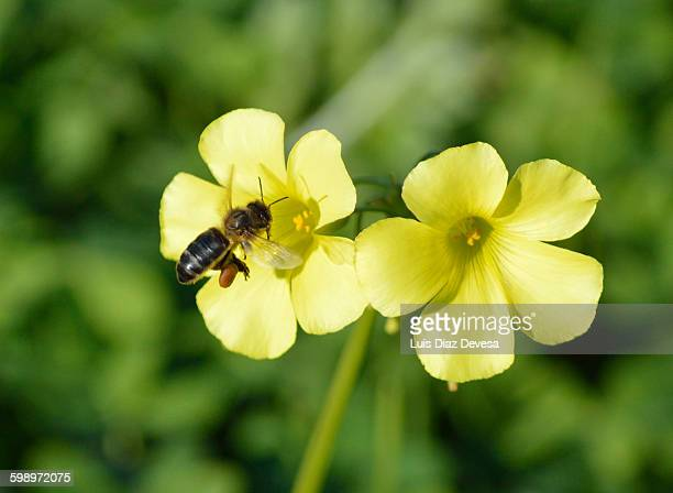 Bee working in the Autunm (in the fall)