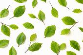 Beech leaves scattered