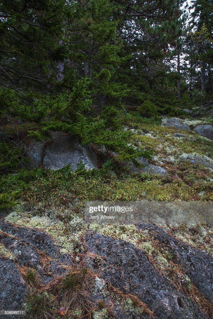 Beech Mtn Trail, Acadia NP, Maine : Stock-Foto