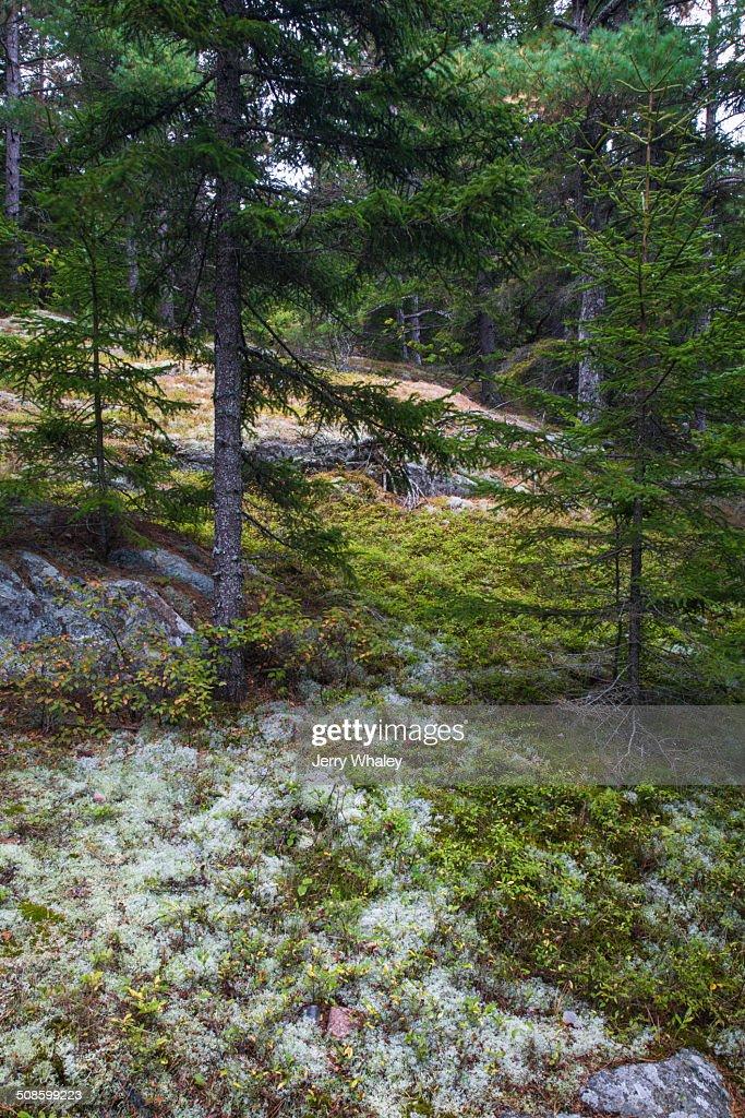 Beech Mtn Trail, Acadia : Foto de stock