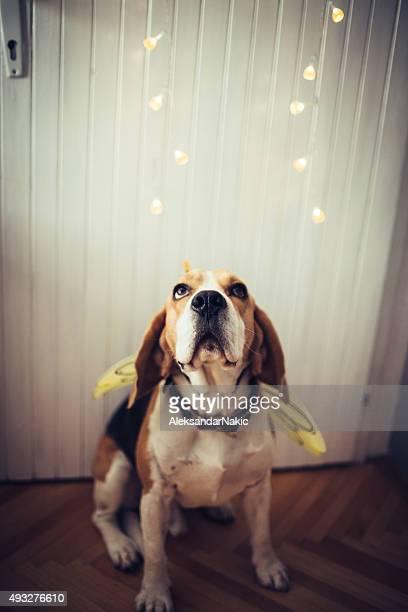 Beeeegle dog