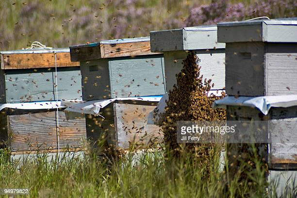Beehives and bees