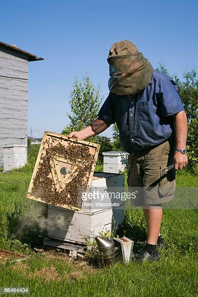 Beekeeper and bees outdoors