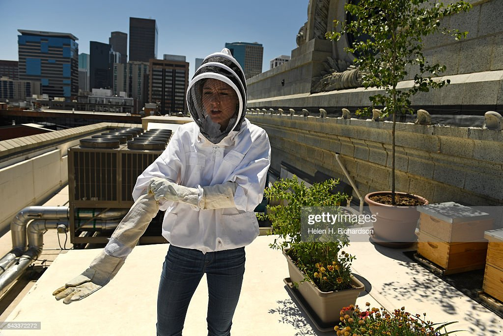 Beekeeper Caitlin Rose Keeney pulls up her gloves as she prepares to tend to four hives of bees on the roof of Union Station on June 27, 2016 in Denver, Colorado. The hives, which were installed last fall, each have between 3,000 to 10,000 bees in them. The urban beekeeping initiative is funded by five Larimer Associate restaurants inside Union Station's Great Hall who will also be the recipients of the honey. They hope to have the first harvest this summer.