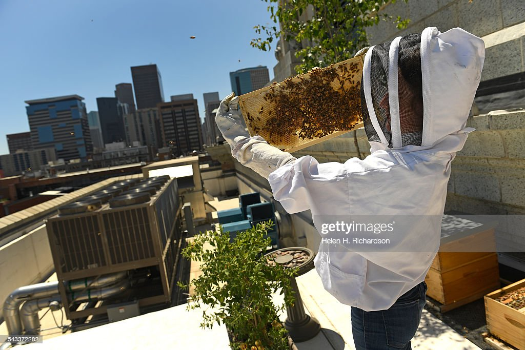 Beekeeper Caitlin Rose Keeney tends to four hives of bees on the roof of Union Station on June 27, 2016 in Denver, Colorado. The hives, which were installed last fall, each have between 3,000 to 10,000 bees in them. The urban beekeeping initiative is funded by five Larimer Associate restaurants inside Union Station's Great Hall who will also be the recipients of the honey. They hope to have the first harvest this summer.
