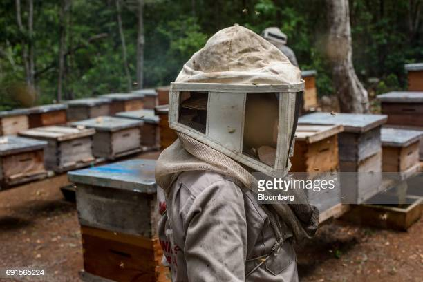 A beekeeper dressed in protective gear stands in front of beehives at the Flor de Tajonal Cooperative farm in Felipe Carrillo Puerto Quintana Roo...