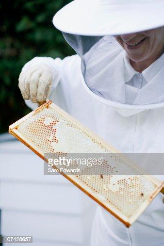 Beekeeper examining honeycomb : Stock Photo