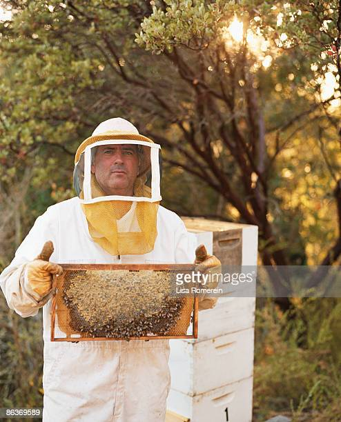 Beekeeper holding a moveable bee hive frame w/bees