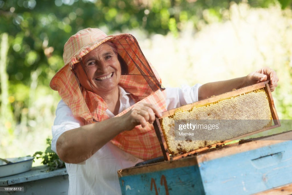 Beekeeper holding honeycomb frame : Stock Photo