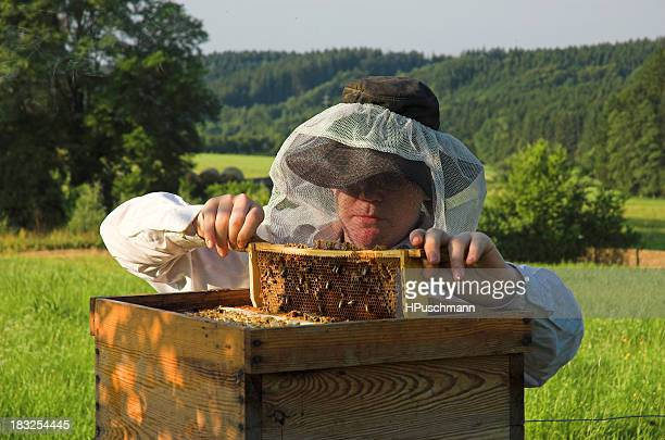 Beekeeper in bee suit checking his hive boxes