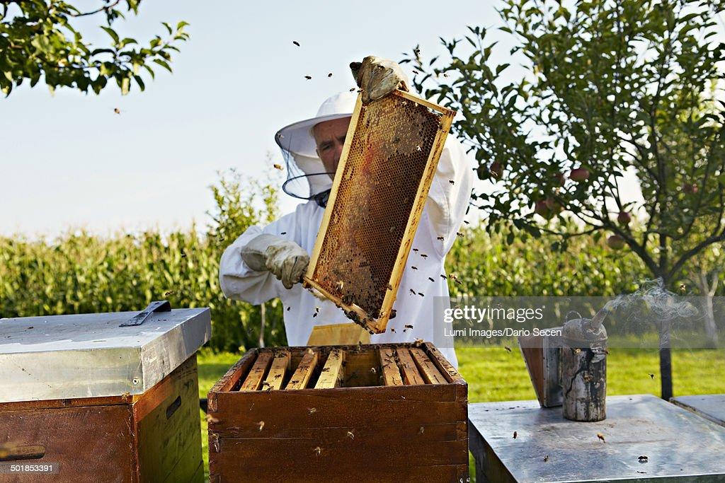 Beekeeper In Garden, Croatia, Europe