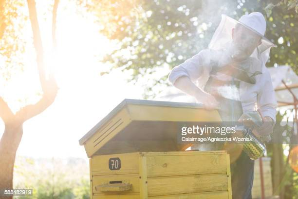 Beekeeper in protective suit using smoker on beehive