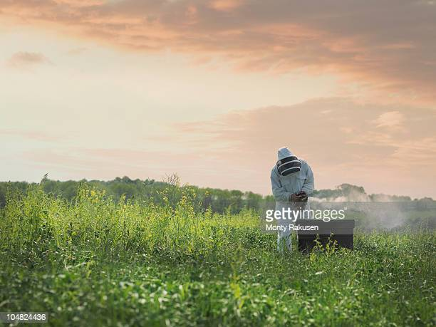Beekeeper inspects bee hive in field