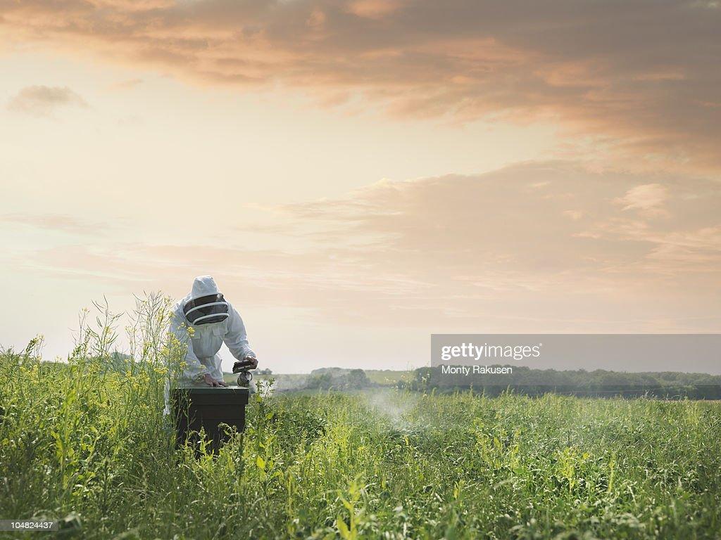 Beekeeper inspects bee hive in field