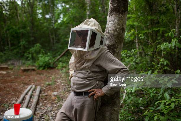 A beekeeper stands at the Flor de Tajonal Cooperative farm in Felipe Carrillo Puerto Quintana Roo Mexico on Sunday May 21 2017 In 2016 291 thousand...