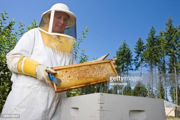 Apiculteur prenant la récolte d'abeille à miel