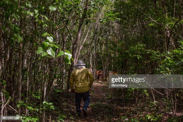 A beekeeper walks towards bee hives at the Flor de Tajonal Cooperative farm in Felipe Carrillo Puerto Quintana Roo Mexico on Sunday May 21 2017 In...