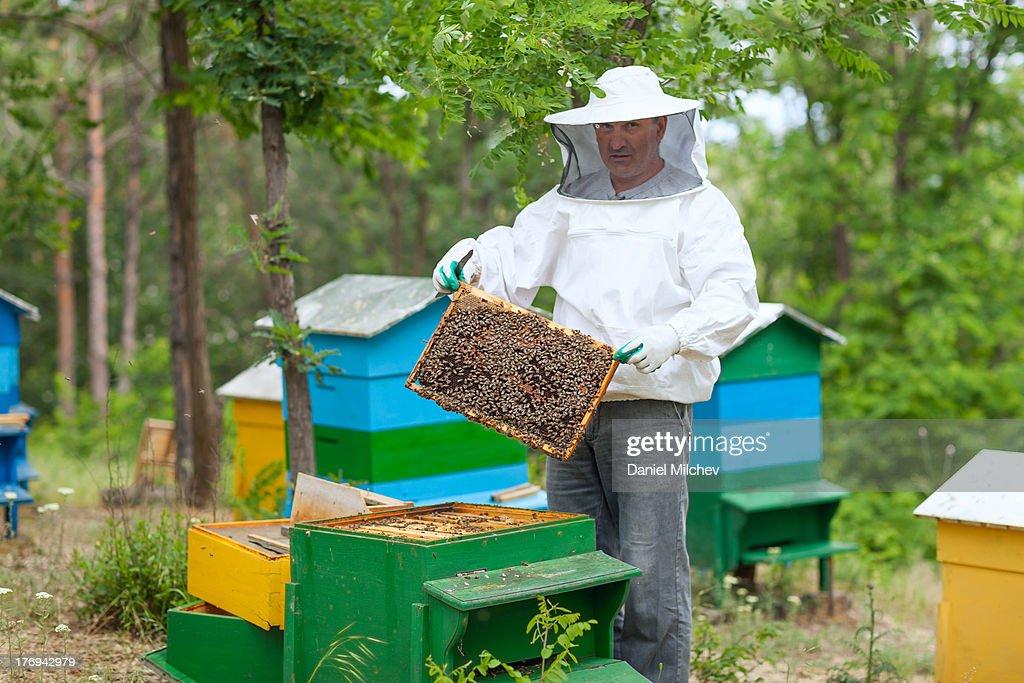 Beekeeper working on his garden hives.