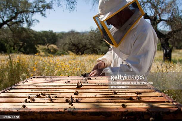 Beekeeper&Honeycombs.