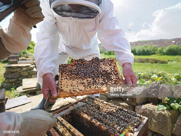 Beekeepers inspect honey comb