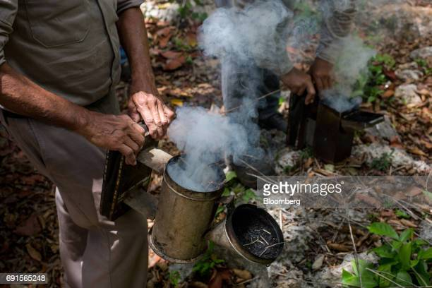 Beekeepers prepare smokers to calm bees at the Flor de Tajonal Cooperative farm in Felipe Carrillo Puerto Quintana Roo Mexico on Sunday May 21 2017...