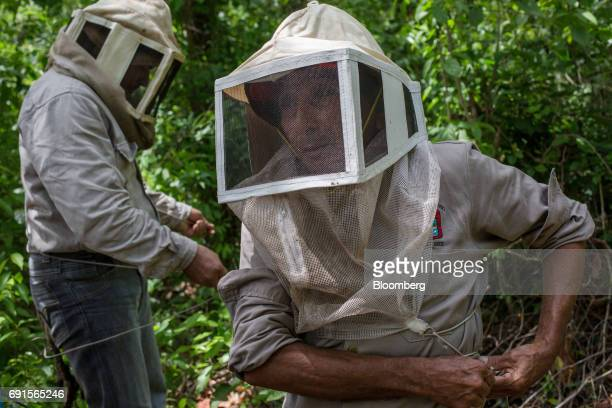 Beekeepers put on protective gear at the Flor de Tajonal Cooperative farm in Felipe Carrillo Puerto Quintana Roo Mexico on Sunday May 21 2017 In 2016...