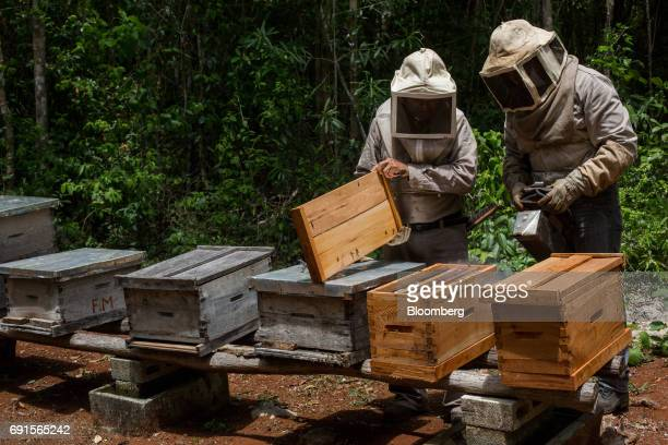 Beekeepers tend to beehives at the Flor de Tajonal Cooperative farm in Felipe Carrillo Puerto Quintana Roo Mexico on Sunday May 21 2017 In 2016 291...