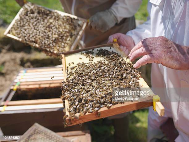 Beekeepers with honey combs