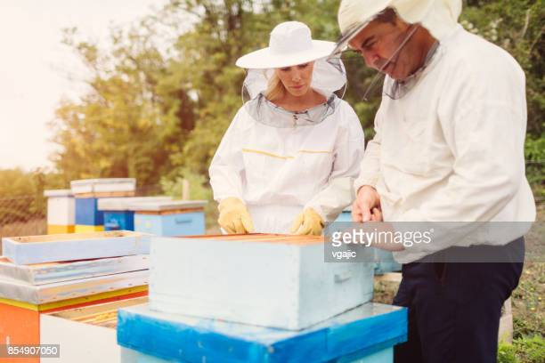 Beekeepers working in an apiary.