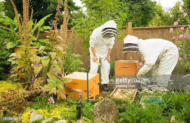 Beekeeping in backyard