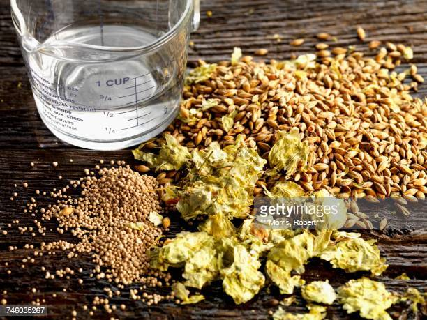 Beer ingredients: hops, yeast, barley and water