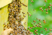 Bees entering a beehive