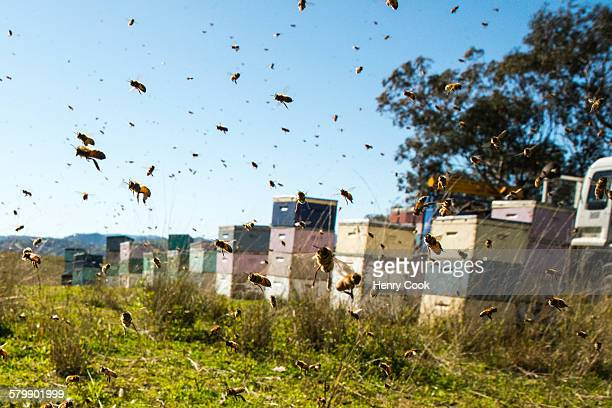 Bees flying strongly