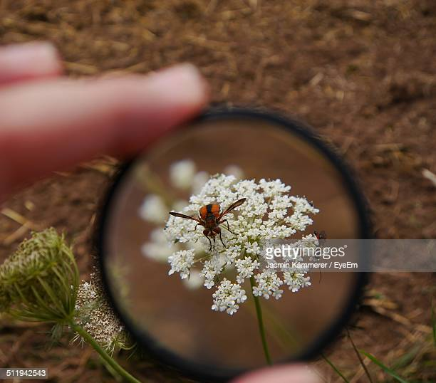 Bees on flowers seen through magnifying glass