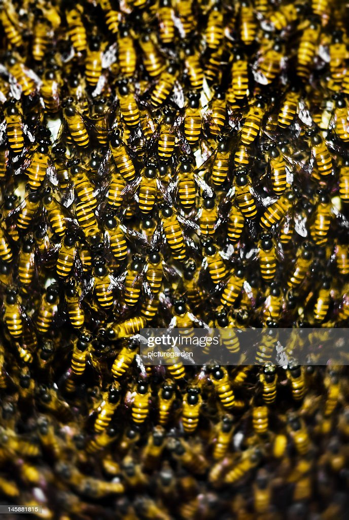 Bees Packed in Beehive : Stock Photo