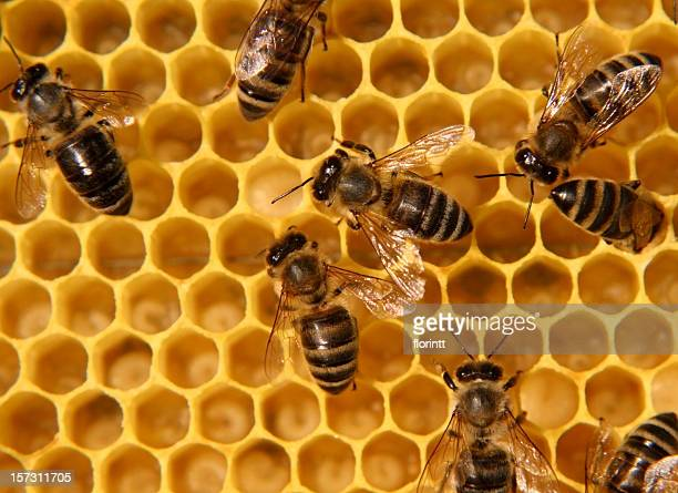 Bees smothering a sticky honeycomb