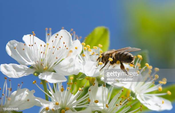 Bees Working