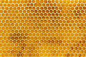 Square on focus of newly pulled honey bee honeycomb beeswax on plastic foundation with pollen tracks.