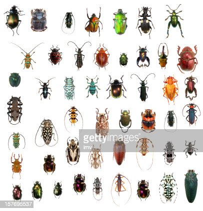 Beetle collection XXXL