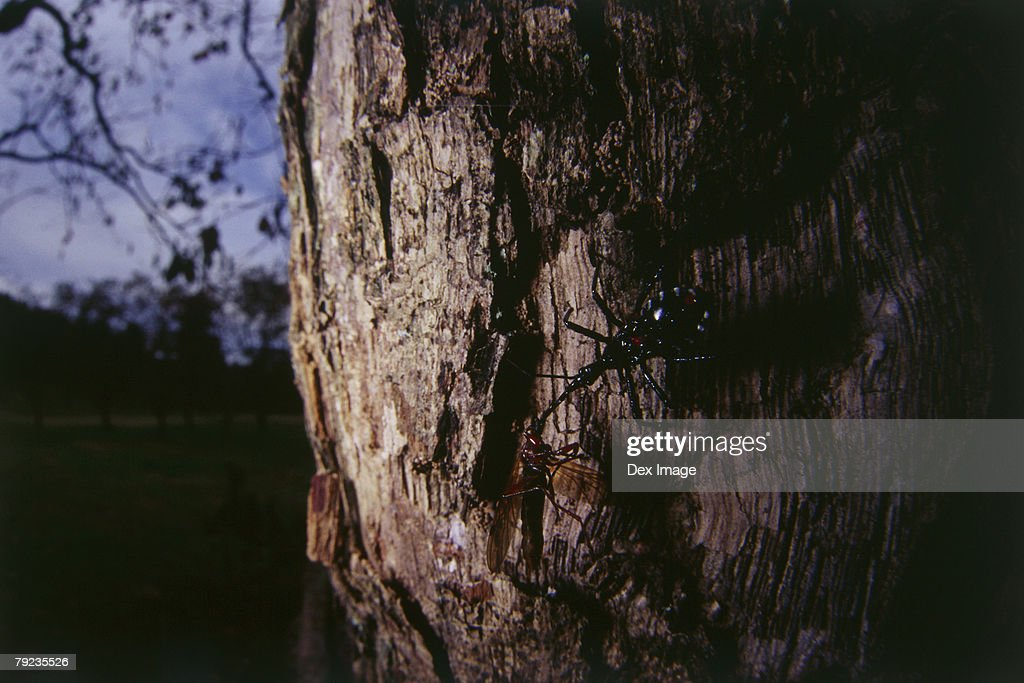 Beetle on tree trunk, camouflage : Stock Photo
