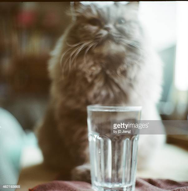 Before a cat's drinking