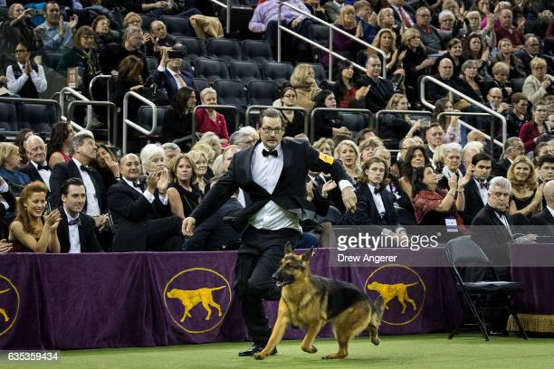 Before being named Best In Show Rumor the German Shepherd and handler Kent Boyles compete in the finals at the Westminster Kennel Club Dog Show at...