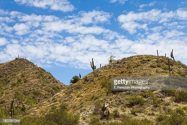 Beginning of the desert