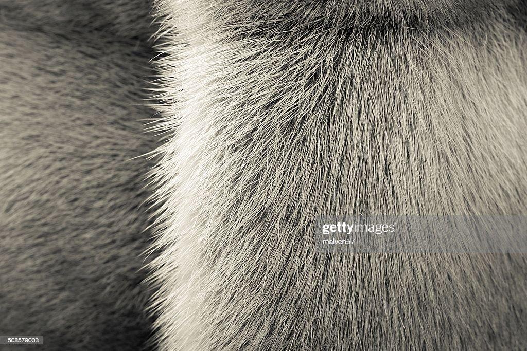 beige Struktur-Tiere mit einem Streifen : Stock-Foto