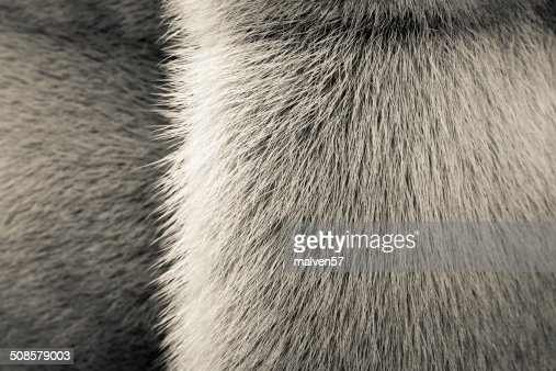 beige texture of fur animals with a strip : Stock Photo